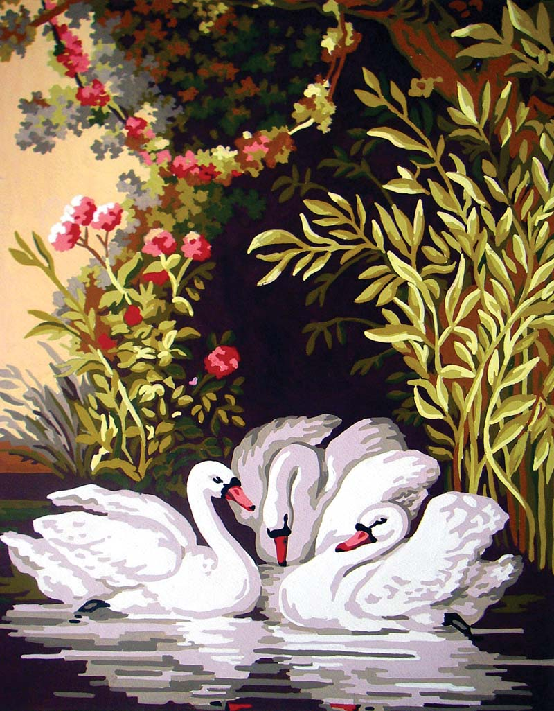 Swans in the Shade