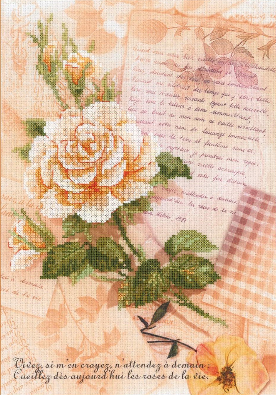 Love Letters and Rose